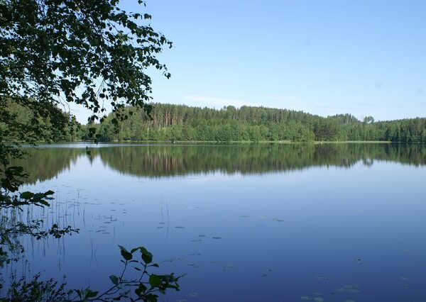 Tontit pohjois-karjala
